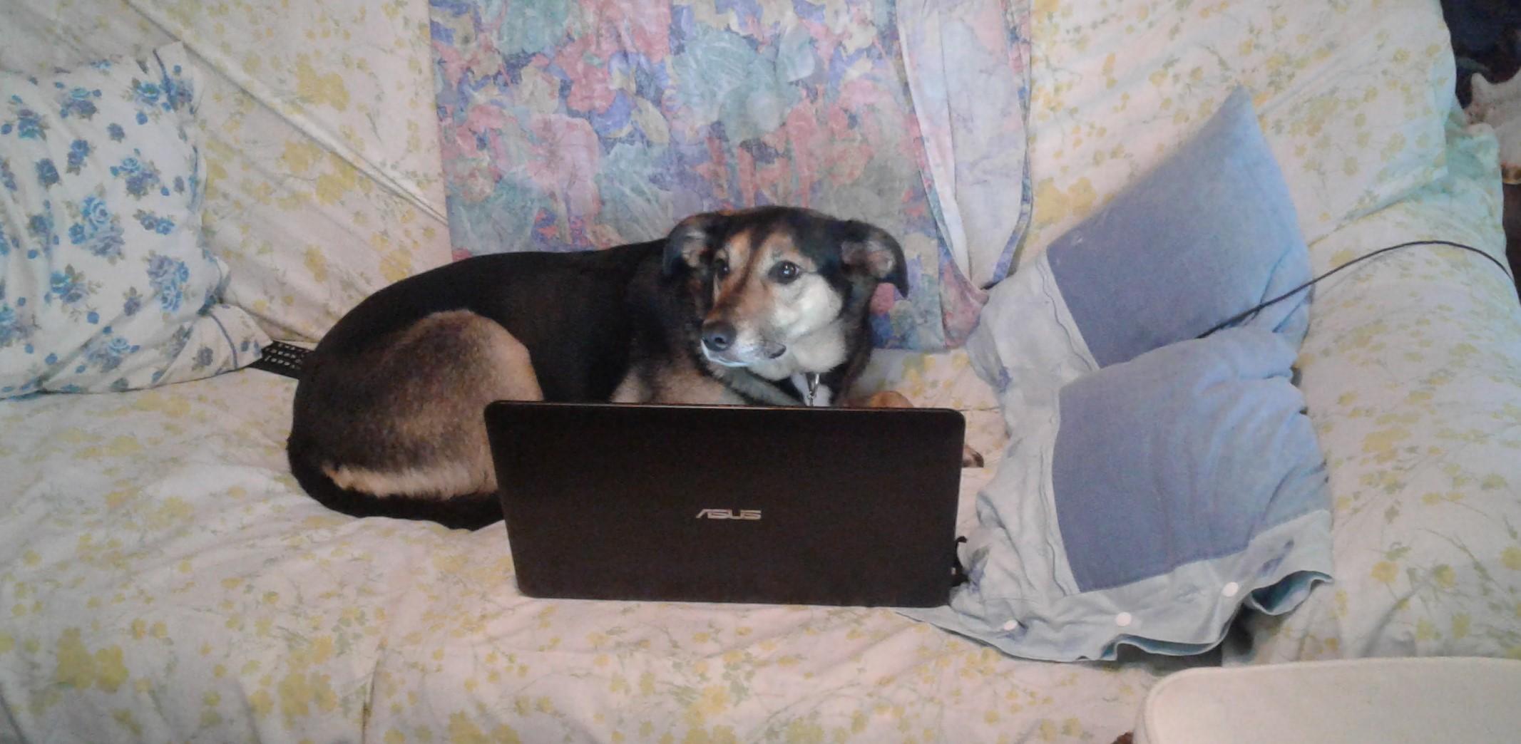 Rischio cardiologico: un cane ci allunga la vita.