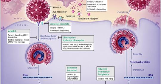 Pillole di Formazione 4: quale terapia per il COVID-19?